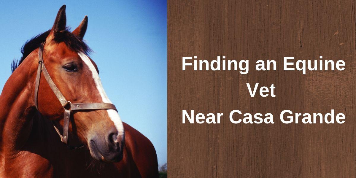 Finding an Equine Vet Near Casa Grande