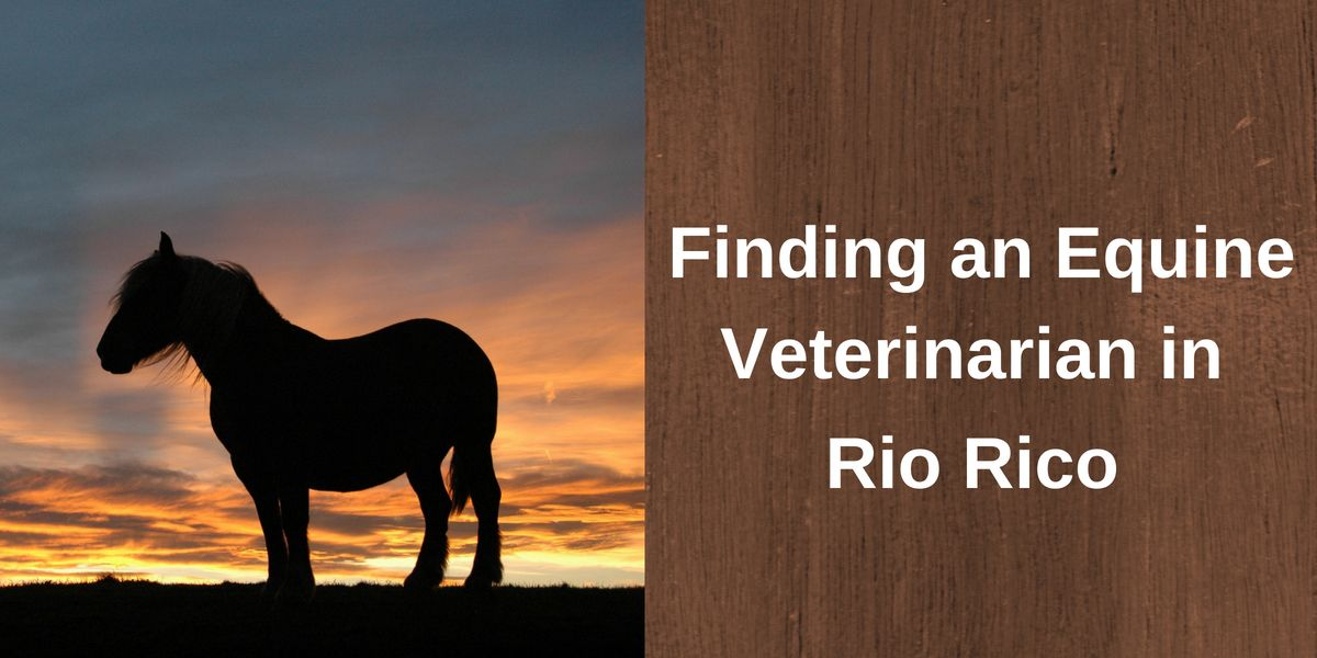 Finding an Equine Veterinarian in Rio Rico