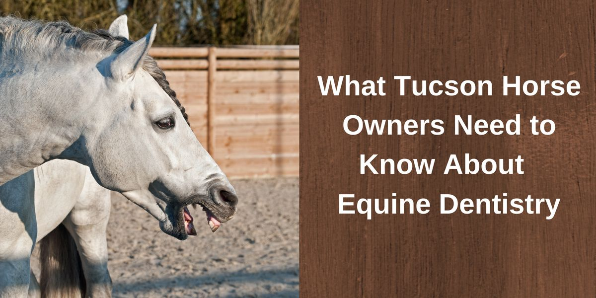 What Tucson Horse Owners Need to Know About Equine Dentistry