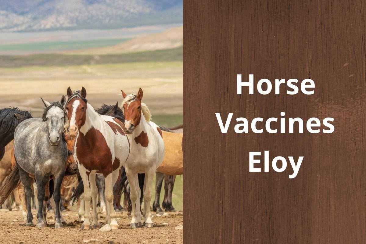 Horse-Vaccines-Eloy