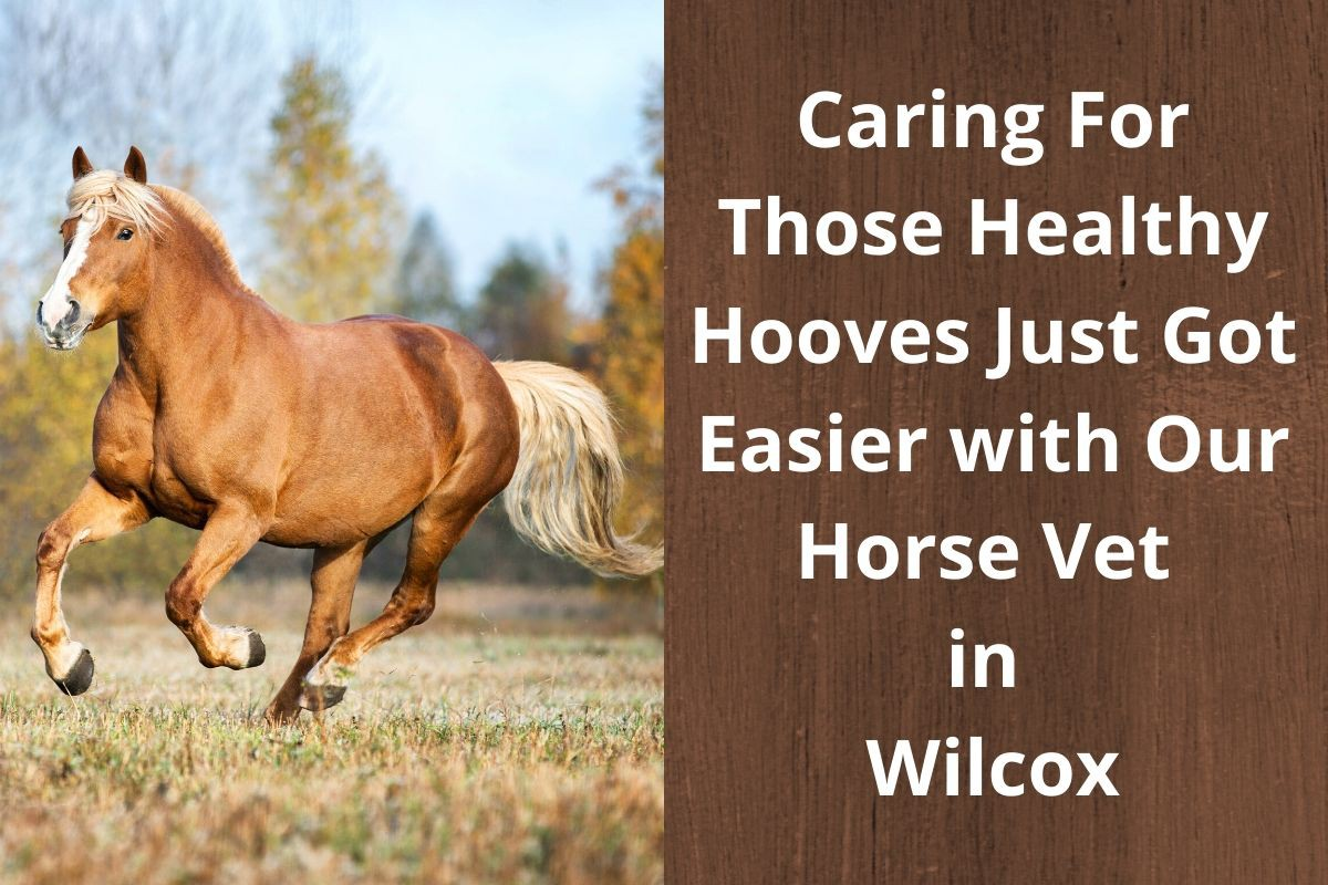 Caring For Those Healthy Hooves Just Got Easier with Our Horse Vet in Wilcox