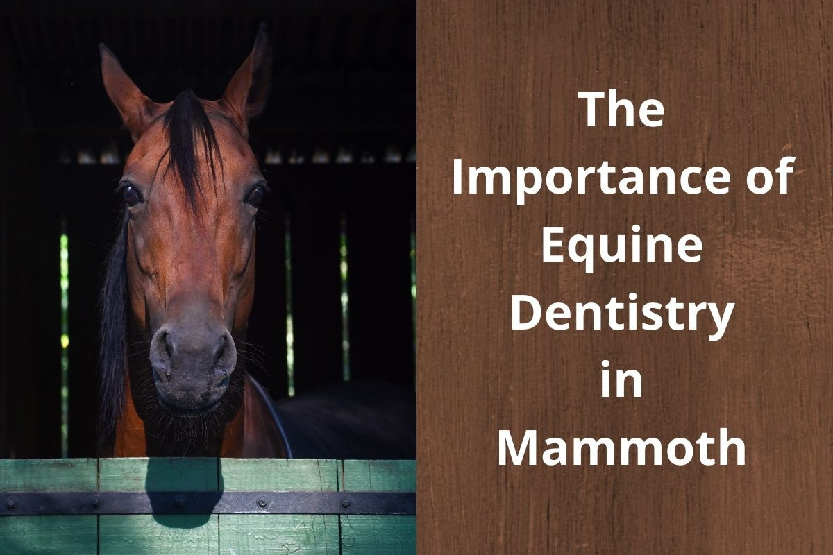The-Importance-of-Equine-Dentistry-in-Mammoth